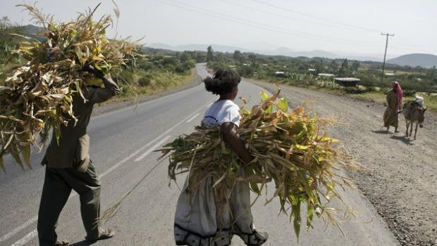 fodder-in-oromia-ethiopia